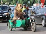 В России байкеры катались на мотоцикле с медведем